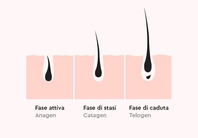 Scopri le tre fasi di ciclo del capello